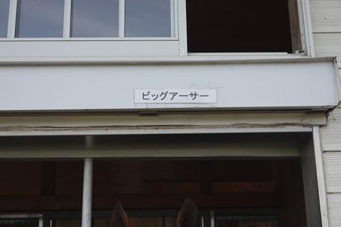 DSC01438_480.JPG